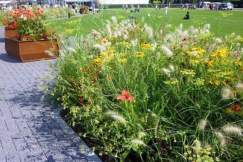 prachtige wilde bloemen op de Floriade