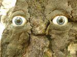 Ogen verstopt in boom bij mijnwerkershuisje Maasmechelen